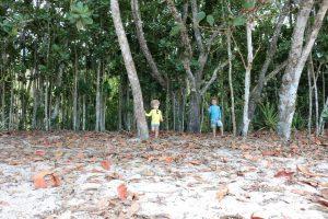 Árvores e sombra na praia do Félix, Ubatuba