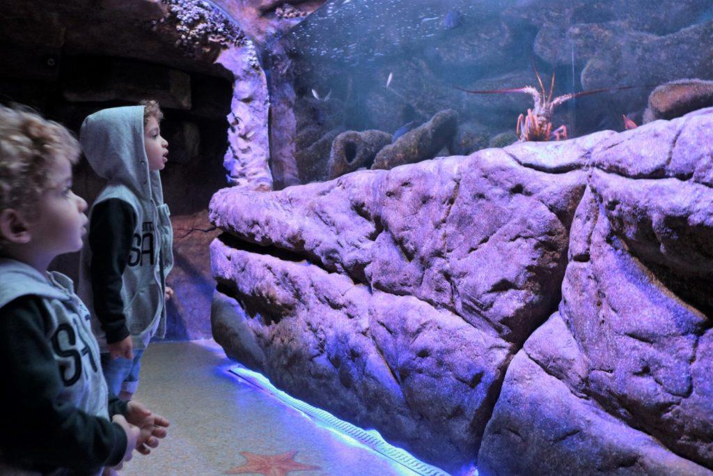 Cauê e Ian no aquário de Ubatuba